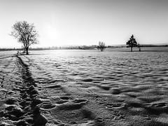 Dem Licht entgegen (Panasonikon) Tags: panasonikon mzuiko918 bw schwarzwald winter schnee snow gegenlicht baum tree landschaft landscape olympusomdem5 weitwinkel