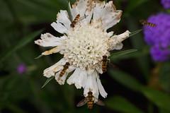 IMG_1837 (Lightcatcher66) Tags: blütenundpflanzen florafauna makros lightcatcher66
