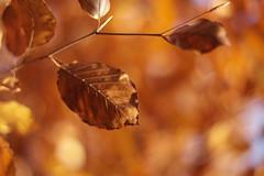11202099 (BS-Foto) Tags: bsfoto herbst automne autumn samsung samsungnx samsungnx200 nx200 nx leica leicar summilux summiluxr summilux50mm summiluxr50mm summiluxr50mmf14 f14 50mmf14 50mm