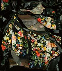 On Reflection - Ori Gersht (lennygaunt) Tags: on reflection ori gersht flowers color photography reflaction mirror video stills insperation