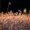 Résistance (valérielecomte) Tags: résistance force automne coucherdesoleil rayondesoleil luminosité light flower fleur haie strength solitude minimalism contraste