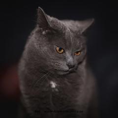 20160229090909 (koppomcolors) Tags: koppomcolors katt cat