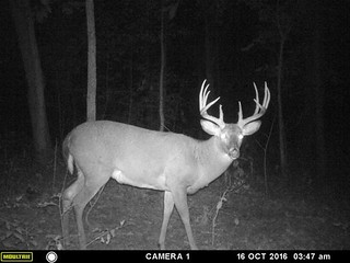 Kentucky Whitetail Hunt 27