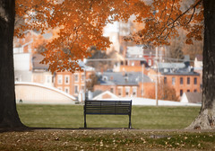 Galena Park Bench (mckenziemedia) Tags: galena illinois park bench fall autumn leaves colors orange green mileaftermagnificentmile city town quaint historic vintage grass tree branches
