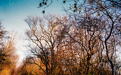 the wind speaks softly to me on days like these (i wen lef) Tags: olympustrip35 analog trees sky filmforever filmcamera