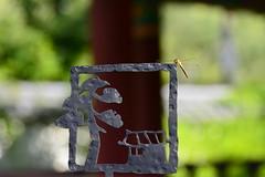 Iron Dragonfly Scene (Leigh MacArthur) Tags: orange macro tree green yellow closeup asian wings nikon asia branch dragonfly wing korea korean rest stick resting southkorea leigh tamron 90mm macarthur d800 polargrape