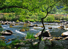 AFON GLASLYN (Messent) Tags: pictures england water river stream poetry railway snowdonia narrowgauge porthmadog aberglaslyn landscapedetail poetryandpicturesinternational poetryforall