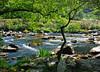 AFON GLASLYN (Messent) Tags: pictures england water river stream poetry railway snowdonia narrowgauge porthmadog aberglaslyn landscapedetail poetryandpicturesinternational poetryforall