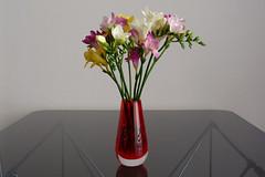 flores de 2013, 12 (mcorreiacampos) Tags: wien austria sterreich zuhause flor blume tisch glas 1030