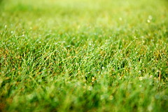 focal lenght (MissLotti) Tags: morning green nature water grass drops focal lenght
