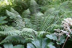 IMG_3422 (bulbinello) Tags: fern woodland garden moss jardin ferns farne garten fougres fougre sousbois mousses varens valmaubrune
