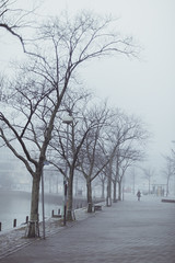 Foggy trees (Mikko Miettinen) Tags: autumn sea mist cold tree water fog suomi finland helsinki foggy baltic serene nordic tranquil meri maisema syksy moist puita sumu sumuinen 2013 vett mikkomiettinen kostea nikkorais50mmf12 nikond800 vision:text=0643