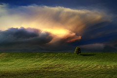 Ominous Clouds (Carlos Gotay Martnez) Tags: light sunset shadow sky storm tree grass clouds hill lonelytree ominousclouds eerieatmosphere