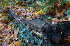 Herbst total (deta k) Tags: autumn berlin fall germany bench deutschland herbst bank leafs bltter sooc nikond5100