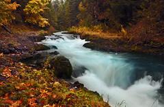 White Salmon Autumn (Darrell Wyatt) Tags: autumn fall leaves creek river leaf whitesalmon