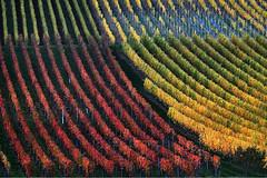 Χρώματα κι αρώματα στους αμπελώνες του Μαρκτμπάιτ στη Γερμανία (πηγή: Karl-Josef Hildenbrand—DPA/Corbis)