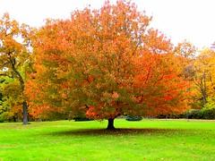 Tree With Autumn Finest
