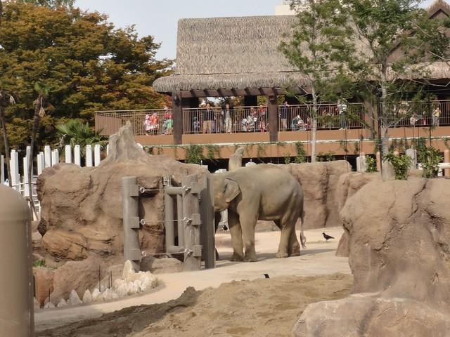 ゾージアムの2階からも屋外の飼育場が見えるようになっていま。|名古屋市東山動植物園