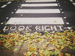 Look Right (John Willoughby) Tags: autumn london leaves crossing pedestrian zebra