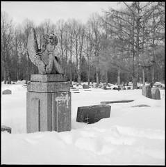 Angel (Elektrojänis) Tags: blackandwhite bw snow film cemetery angel kodak trix yashicamatem ei1600 microphen malminhautausmaa microphen1118min