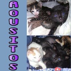 LOS ROUSITOS (Cartel 01) (Asociación Defensa Felina de Sevilla) Tags: españa sevilla gatos felinos animales gatitos adoptar protectora adopciones apadrinar gatosurbanos defensafelina asociacióndeanimales coloniasdegatos proteccióndegatos activismoporlosanimales