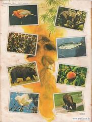 Natureza Viva 1977 verso