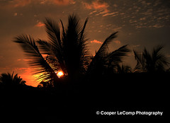 Palm Tree at Sunset (Cooper LeComp Photography) Tags: sunset wallpaper beautiful hawaii palmtree tropical