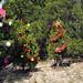 Trees_of_Loop_360_2013_129