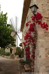 Mallorca (Hans Westerink) Tags: travel flowers mill 1969 windmill canon eos postcard hans mallorca molen wieken reizen briefkaart 450d westerink hanswesterink hanswesterink1969