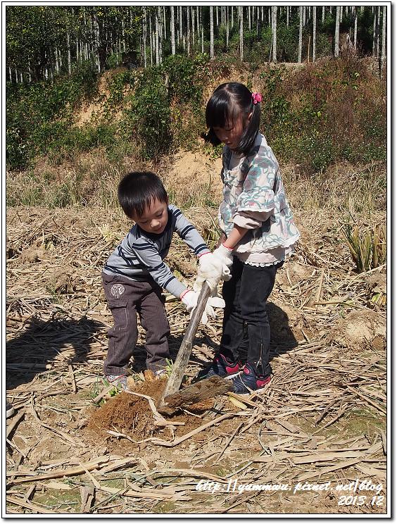 埔里筊白筍35