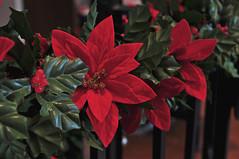 Garland (BKHagar *Kim*) Tags: christmas red holiday green reindeer spiral berries poinsettia artificial garland holly staircase handrail spiralstaircase week49 focus52 bkhagar alabamafocus52