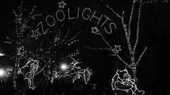 Zoolights 2013 34475