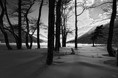Mist, Trees and Long Shadows (H.B. Mejia) Tags: trees winter blackandwhite mist snow mountains beautiful spectacular shadows unescoworldheritagesite unesco stunning erie watertonlakes waterton winterweather blackandwhitephotography longshadows southernalberta watertonlakespark stunningphotography watertoninternationalpeacepark spectacularphotography