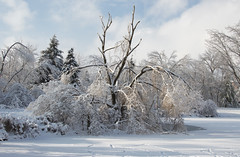 landscape (obukovska) Tags: snow ice afterthestorm winterwonderland brokentree harshweather