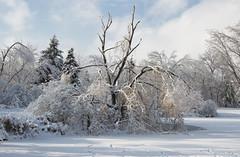 landscape (obukovska) Tags: snow ice afterthestorm winterwonderland brokentree harshweather