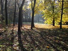 (ela_s) Tags: park autumn jesień canons90