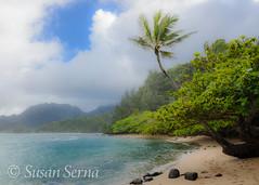 Stormy Day on the North Shore (SusanRSerna) Tags: ocean sea mountain seascape mountains tree beach clouds hawaii sand rocks palmtree kauai tropical