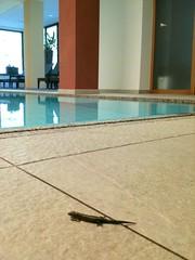 Schwimmbad mit Silberquarzit (Hotel Rainer Suedtirol) Tags: sdtirol schwimmbad pfitschtal wellnesshotel naturhotel