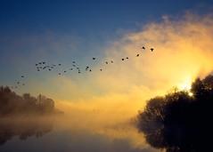 Foggy Sunrise (Android9) Tags: morning blue light sky lake reflection water birds fog sunrise canon flying ducks reflected gradient through 6d reflectedsky reflectedinwater theskyatsunrise