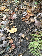 "Earth worm castings • <a style=""font-size:0.8em;"" href=""http://www.flickr.com/photos/92887964@N02/12599631313/"" target=""_blank"">View on Flickr</a>"