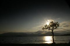 Millarochy Bay 3 (Sue Langford) Tags: scotland oak pentax lochlomond millarochybay pentaxk100dsuper