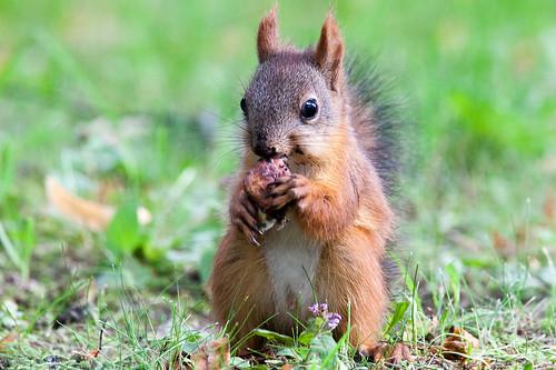 Squirrel ©  aplart