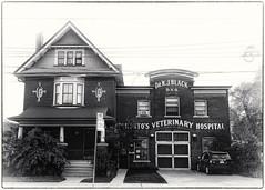 Dr. Black's ~ Queen Street East, Toronto (Sally E J Hunter) Tags: toronto queeneast queenstreeteast queenstreet vet veterinarian drblack drrjblack leslieville edwardianclassical