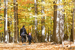 Walking in the wood - Quebec (Nino H) Tags: canada quebec qubec automne autumn fall colors parc tree leaves nature