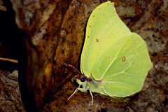 last butterfly (zool18) Tags: beauty butterfly nature insect canon pink green life picture animal flickr macro mark2 amazing autumn awesome outdoor color foto ukraine