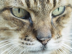 Through your eyes (ming-©hi) Tags: olympus omd em1 micro43 m43 makroplanart250 mp50 mp50f20 t cat carlzeiss zeiss