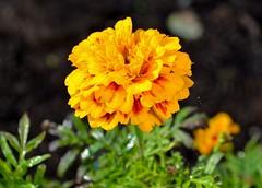 Flower (Umax670) Tags: november