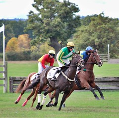 Hightailing (dana.ny) Tags: horse equine hunt geneseevalley jumper bay silks race jockey autumn fall english leap jump gallop
