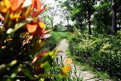 Pathway (keanulaksana) Tags: pathway pathways garden secretgarden flower colorful beautiful green leaf nature background wallpaper plant trees landscape highresolution