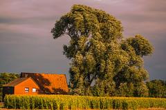 Herbstimpression (fredy_egdorf) Tags: wind herbst lichtstimmung nikon d750 lightroom pscc2015 luminanzmaske 2015 sigma 70200 mnsterland